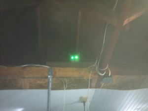cat in the garage rafters